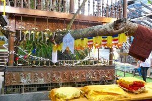Árbol Bodhi del Templo Gangaramaya