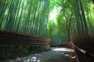 Bosque de Bambú de Arashiyama en Kioto