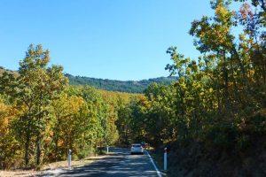 Carretera de acceso al Hayedo de Montejo