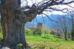 Torre de Mogrovejo junto a la casona señorial y la capilla