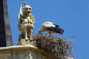 Cigüeña blanca, un símbolo de Alcalá de Henares