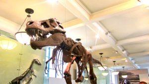 Sala de dinosaurios en el Museo Americano de Historia Natural de Nueva York