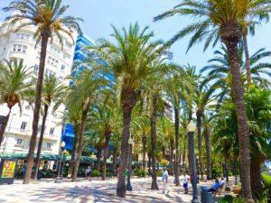 Palmeras de la Explanada de España junto al Puerto de Alicante
