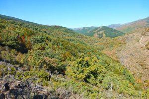 Hayedo de Montejo en el corazón de la Sierra del Rincón