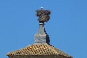 Nido de cigüeñas en la Casa de las Torres de Tembleque