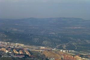 Olivares rodeando Jaén, Capital Mundial del Aceite de Oliva