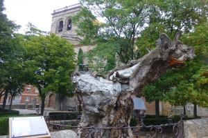 Olmo seco en la Iglesia de Nuestra Señora del Espino, iglesias de Soria