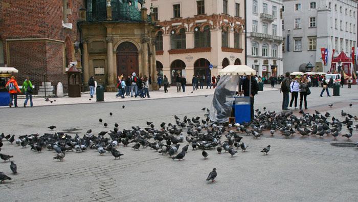 Palomas en la Plaza del Mercado de Cracovia