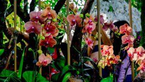 Beijing Garden of Worl's Flowers, una de las atracciones de Pekín