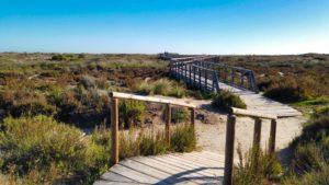 Pasarelas de madera entre la flora autóctona de las dunas