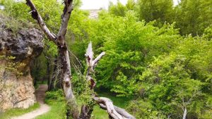 Ruta de la Hoz de Pelegrina en el Barranco del Río Dulce