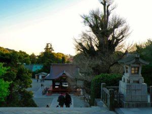 Vistas desde el Santuario Tsurugaoka Hachimangu de Kamakura