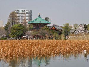 Templo Betendo en medio del estanque de Shinobazu del Parque Ueno