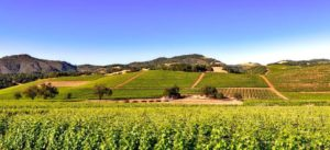 Valle de Napa, famosa zona de producción de vinos cerca de Los Ángeles