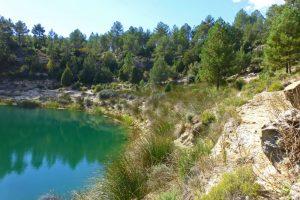 Vegetación a orillas de las Lagunas de Cañada del Hoyo