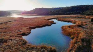 Vegetación palustre de las lagunas altas