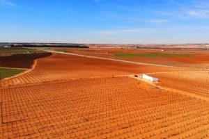 Viñedos de La Mancha