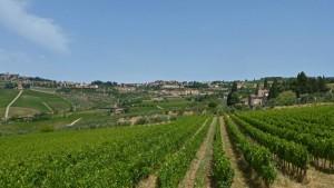 Viñedos de la Toscana, donde se produce la Denominación de Origen Chianti Colli Fiorentini