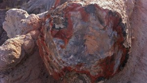 Tronco fosilizado de la ruta Crystal Forest Trail, en Petrified Forest