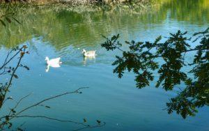 Flora y fauna de la Laguna del Salmoral